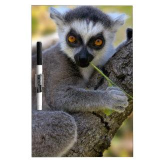 Baby Ring Tailed Lemur Dry Erase Board