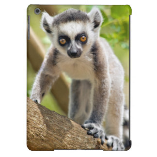 Baby ring-tailed lemur iPad air case