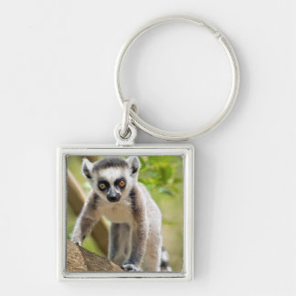 Baby ring-tailed lemur Silver-Colored square keychain