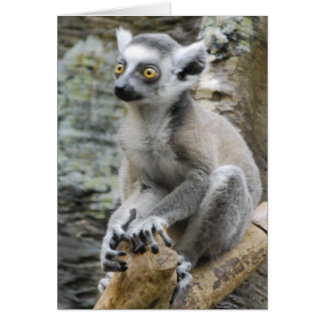 Baby Ringtailed Lemur Greeting Card