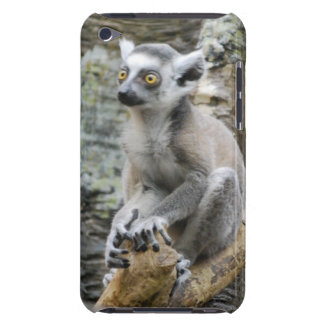 Baby Ringtailed Lemur iTouch Case Barely There iPod Cases