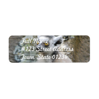 Baby Ringtailed Lemur Mailing Label
