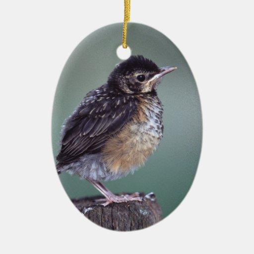 baby robin christmas ornament