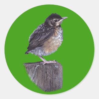 Baby Robin Classic Round Sticker