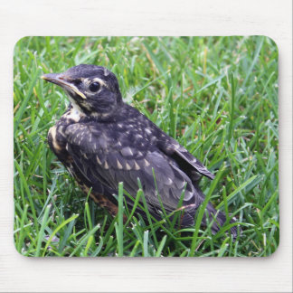 Baby Robin Just Out of Nest Photo Mouse Pad