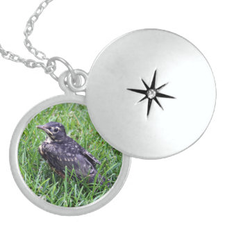 Baby Robin Just Out of Nest Round Locket Necklace