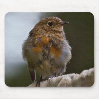 Baby Robin Mousemat Mouse Pad