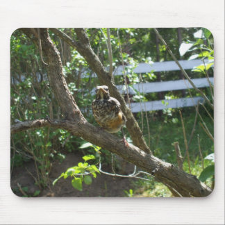 Baby Robin on Branch. Mouse Pad