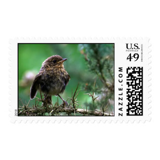 Baby Robin Postage
