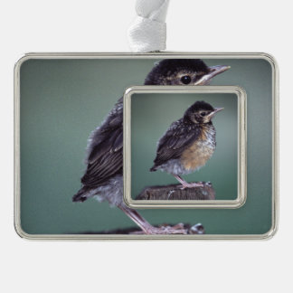 baby robin silver plated framed ornament