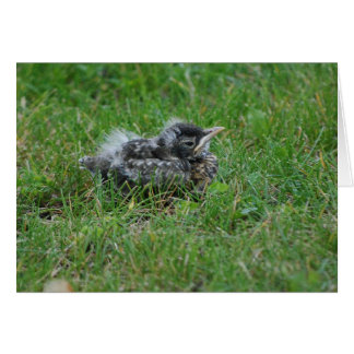 Baby Robin taking a little rest. Card