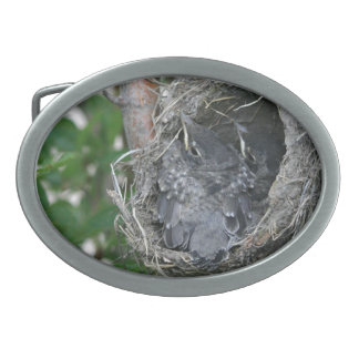 Baby Robins in the Nest Oval Belt Buckles
