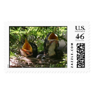 Baby Robins Stamp