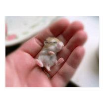 Baby Roborovski Hamster Postcard