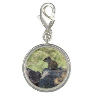 Baby Rock Squirrel Photo Charm