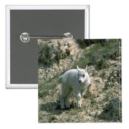 Baby Rocky Mountain Goat Button