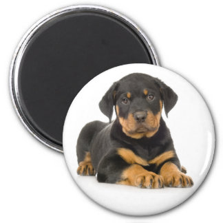 Baby Rottweiler Brown And Black Puppy Dog Magnet