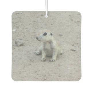 Baby Round-tail Ground Squirrel Air Freshener