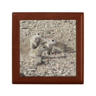 Baby Round-tailed Ground Squirrel Family Keepsake Box
