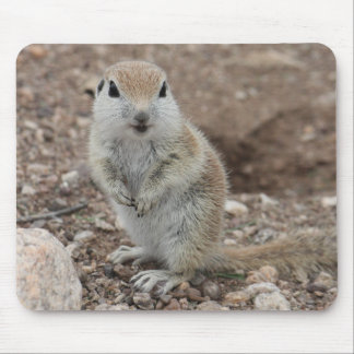 Baby Round-tailed Ground Squirrel Mouse Pad