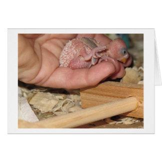 Baby Rufus Card