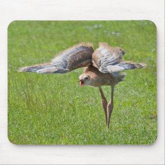 Baby Sandhill Crane Mousepad