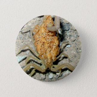 Baby Scorpions Pinback Button