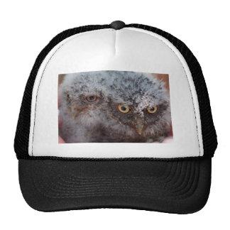 Baby Screech Owls hat