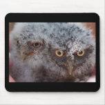 Baby Screech Owls mousepad