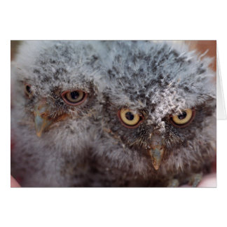 Baby Screech Owls note card