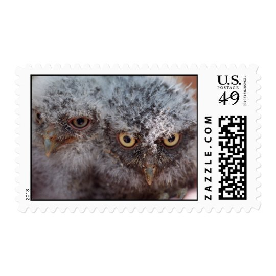 Baby Screech Owls postage stamp