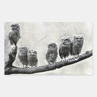 Baby Screech Owls Sticker