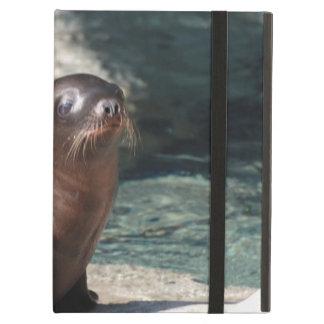 baby-sea-lion-6.jpg