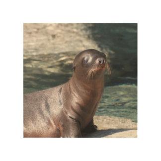 baby-sea-lion-6.jpg wood print