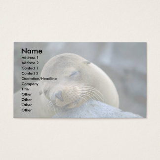 Baby sea lion, Galapagos Islands Business Card