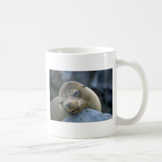 Baby sea lion, Galapagos Islands Coffee Mug