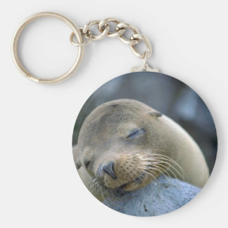 Baby sea lion, Galapagos Islands Keychain