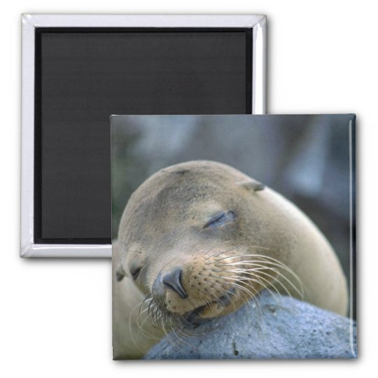 Baby sea lion, Galapagos Islands Magnet
