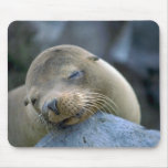 Baby sea lion, Galapagos Islands Mouse Pad