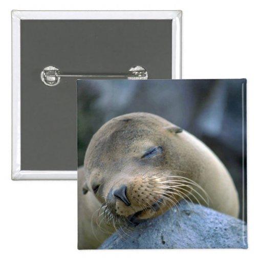 Baby sea lion, Galapagos Islands Pinback Button