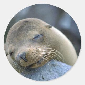 Baby sea lion, Galapagos Islands Round Sticker