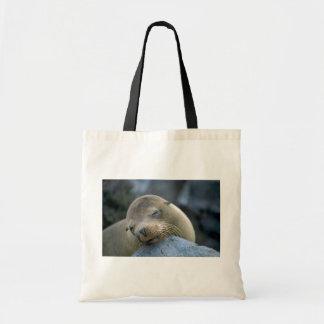Baby sea lion, Galapagos Islands Tote Bag