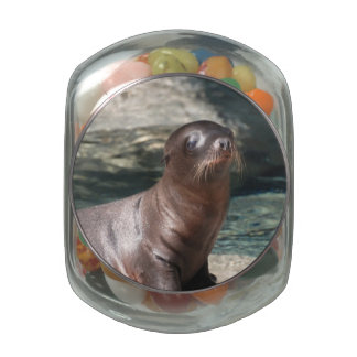 Baby Sea Lion Jelly Belly Candy Jar