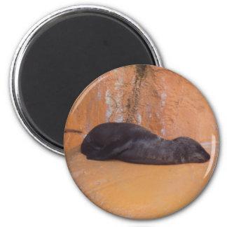 baby sea lion magnet