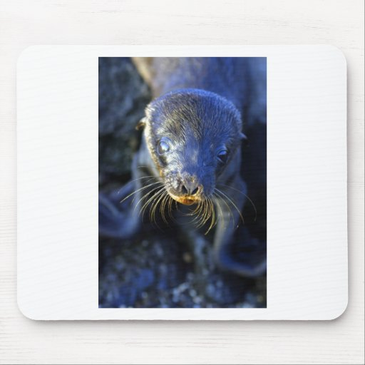 Baby sea lion mouse pad
