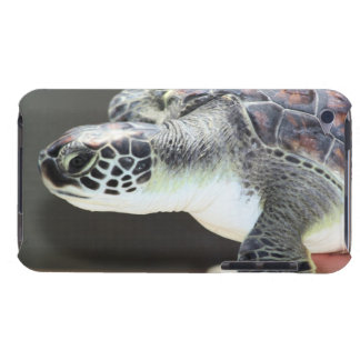 Baby Sea Turtle Barely There iPod Case