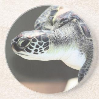 Baby Sea Turtle Coaster