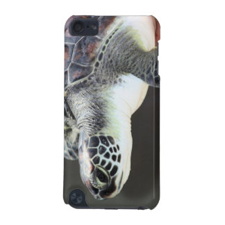 Baby Sea Turtle IPod Touch Case