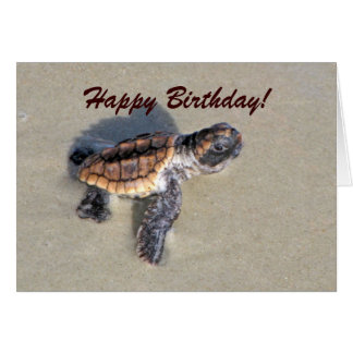 Baby Sea Turtle, Just Hatched Greeting Card