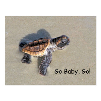 Baby Sea Turtle, Just Hatched Postcard